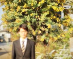 山下エミリ ミモザの木